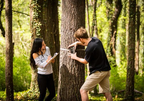 Two students get data from a trail camera attached to a tree